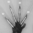 Digit ratio in three species of tropidurid ...