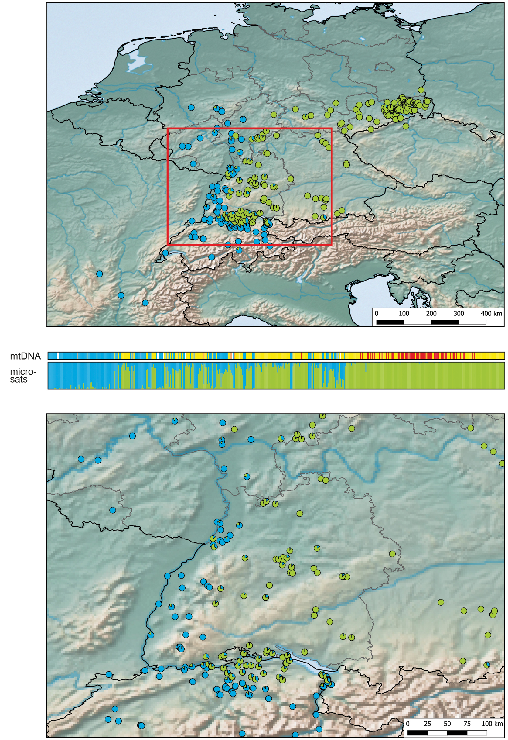 Distribution And Hybridisation Of Barred And Common Grass Snakes Natrix Helvetica N Natrix In Baden Wurttemberg South Western Germany